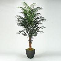 Tree Palm Areca I 8'