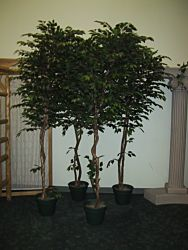 Tree Ficus Silk I 8'